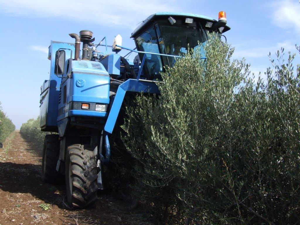 オリーブの実収穫専用のトラクター